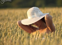 In the Field of Summer
